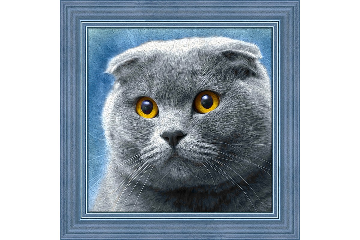 GATTO SCOTTISH - diamond painting - La Bottega delle Idee